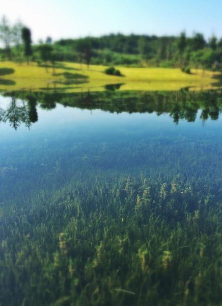 清澈见底的麓湖
