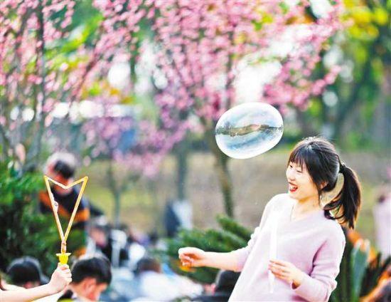 2月17日,照母山森林公园,市民在梅园兴致勃勃地赏梅拍照,享受春日。特约摄影 钟志兵/视觉重庆