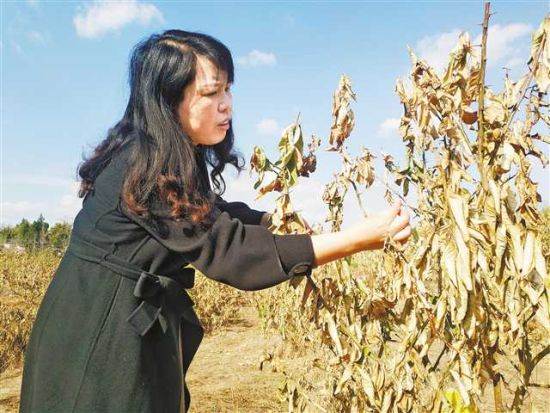 《【恒耀总代理】20余年扎根乡村促当地产业健康发展》