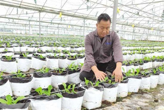 姜国强探索创新大棚蔬菜种植技术