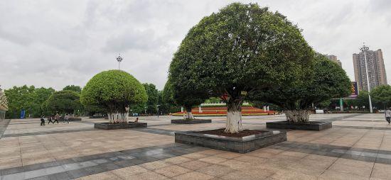 """铜梁:植物""""体检""""提升城市绿化品质"""