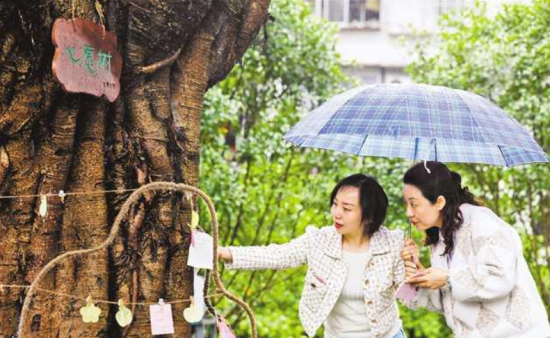 """4月24日,万州区双河口街道螺蛳包社区的工作人员在""""心愿树""""下收集民意。重报集团三峡分社记者 巨建兵 摄/视觉重庆"""