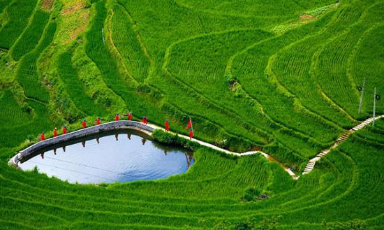 國家電網紅巖共產黨員服務隊穿梭在田間地頭服務鄉村振興