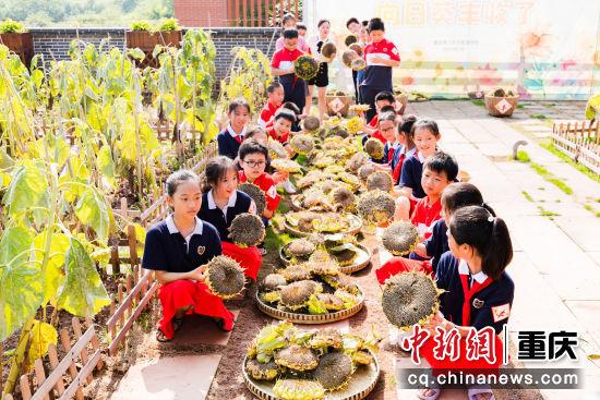 图为重庆两江新区星湖学校学生参加向日葵采摘课程。 黄维正 摄