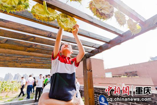 图为重庆两江新区星湖学校学生晾晒向日葵。 黄维正 摄
