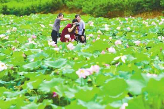 游人在花海中赏花拍照。秦廷富 摄
