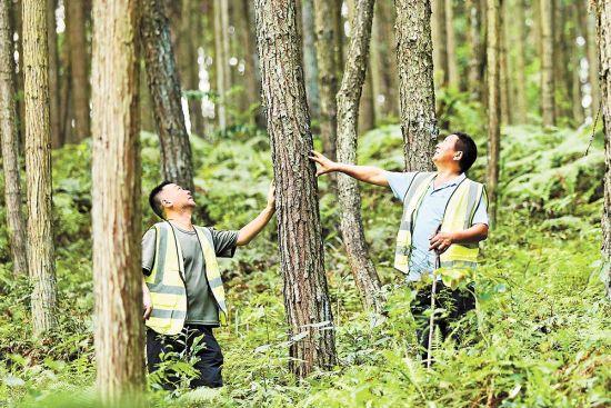 图为8月4日中午,气温已超过40℃,彭水国有林场马栏管护站工作人员正在巡山护林。通讯员 赵勇 摄/视觉重庆