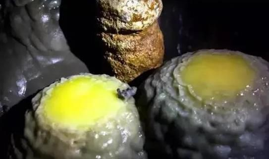 """图为""""金扁蛋""""画面。石柱农旅集团供图"""