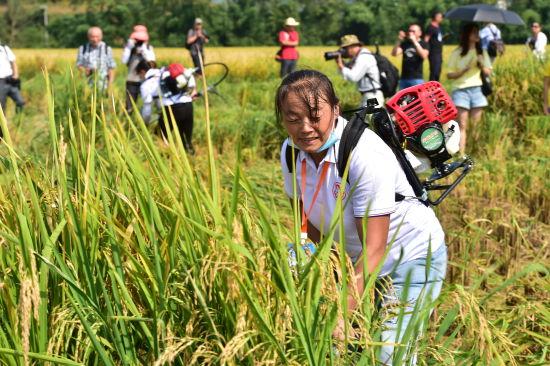 活动现场,18名青年女农民能手运用小型农机具开展水稻收割比赛。重庆市妇联供图