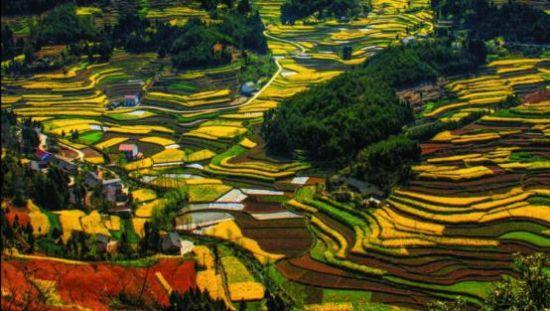 陕西汉中来渝推旅游 邀市民乘高铁游油菜花海