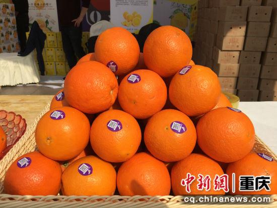 图为活动现场展销的奉节脐橙 。(张颖绿荞 摄)