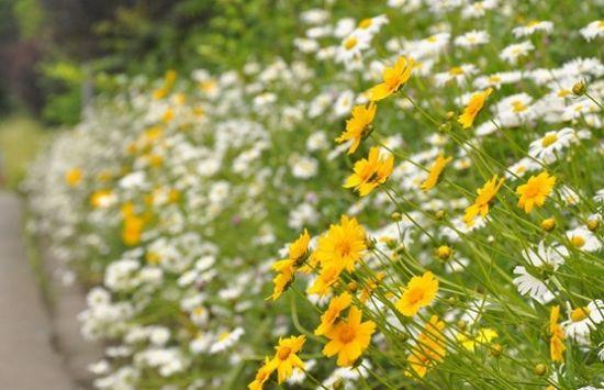 鲜花盛开。通讯员 陈林 摄