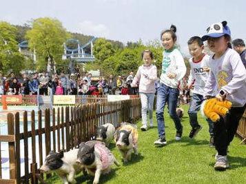 重庆一动物园举行动物春季运动会