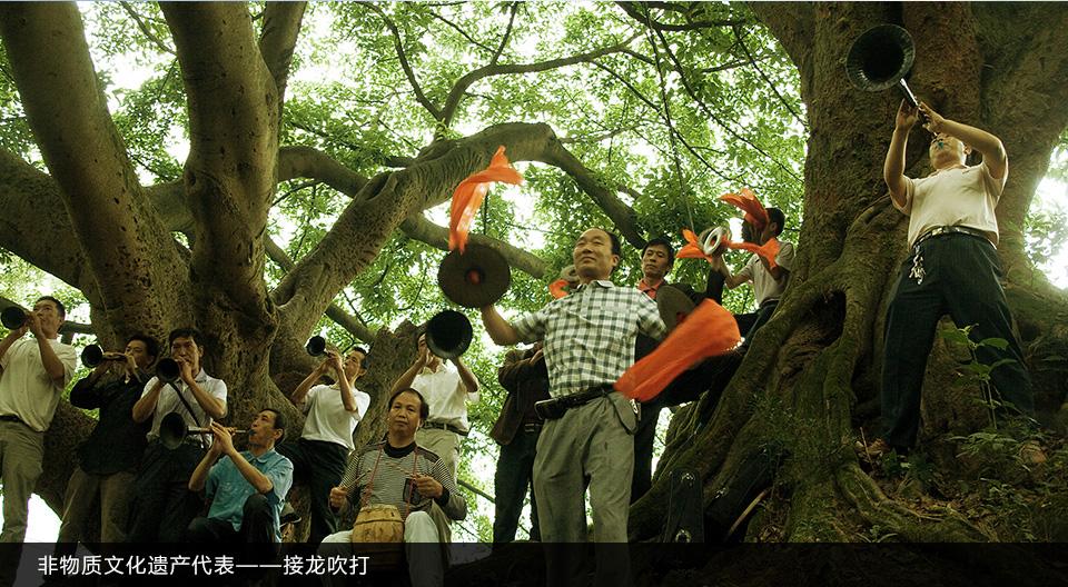 千年古树野樟香茶叶